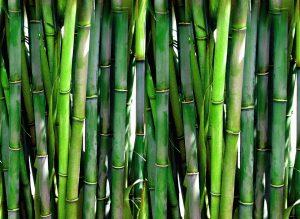 riz vert perles jade biologique extrait bambou