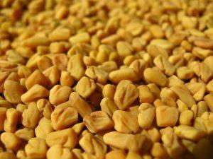 fenugrec fenugreek graines entieres biologique epice plante medicinale