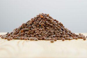 lentilles brunes biologique legumineuses fibres fer proteines bienfaits sante