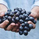 raisins secs varietes biologiques fruit origine vert sultana thompson