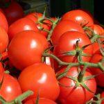 tomates fruit sechees tranchees biologique turquie sel soleil origine